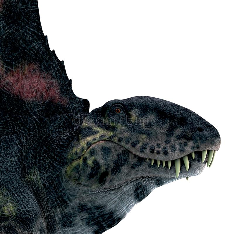 Dimetrodon Reptile Head. Dimetrodon was a sail-back carnivorous dinosaur that lived in North America and Europe during the Permian Period vector illustration