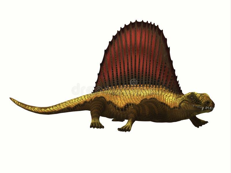 Dimetrodon Reptile Profile. Dimetrodon was a mammal-like sailback reptile that lived in the Permian Period of North America and Europe stock illustration