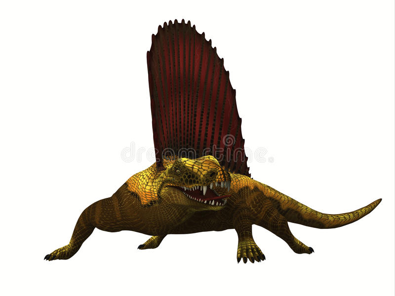 Dimetrodon Reptile. Dimetrodon was a mammal-like sailback reptile that lived in the Permian Period of North America and Europe vector illustration