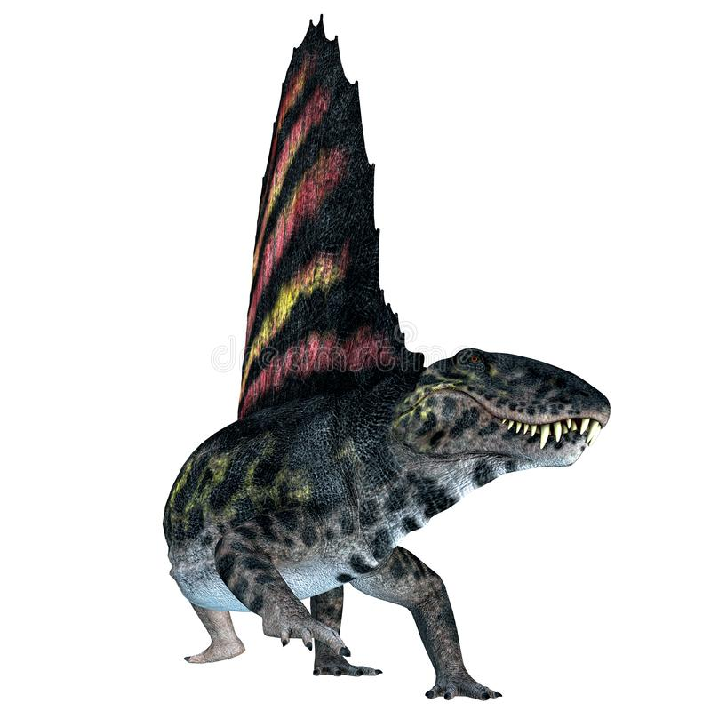 Dimetrodon Reptile on White. Dimetrodon was a sail-back carnivorous dinosaur that lived in North America and Europe during the Permian Period royalty free illustration