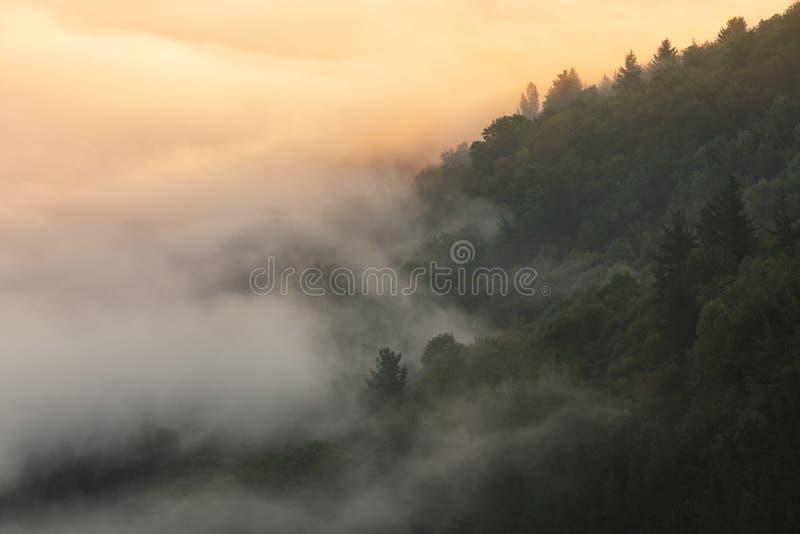 Dimma över bokträdskog i Aramaio arkivbilder