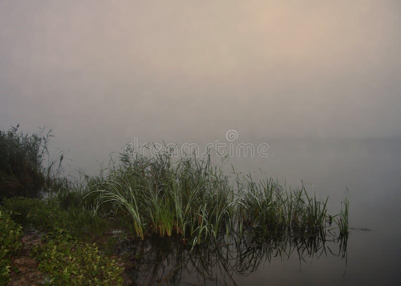 Dimma över floden, sommarmorgon royaltyfri fotografi