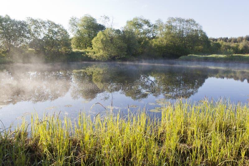 Dimma över sjön per försommarmorgon arkivbilder