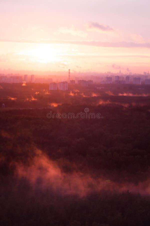 Dimma över skogen på solnedgången arkivfoton