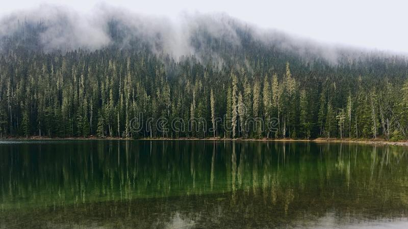 Dimma över skogen runt om bergsjön royaltyfri bild