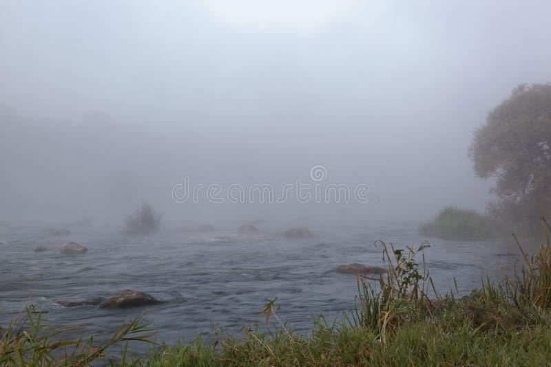 Dimma för Forest River forsmorgon på soluppgång arkivfoton