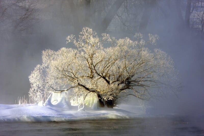 dimma fryst tree royaltyfria foton