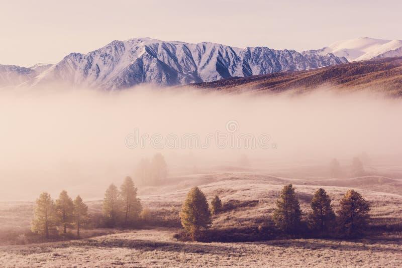 Dimma i bergdalen Moln av dimma under den rosa himlen tidigt på morgonen arkivfoto