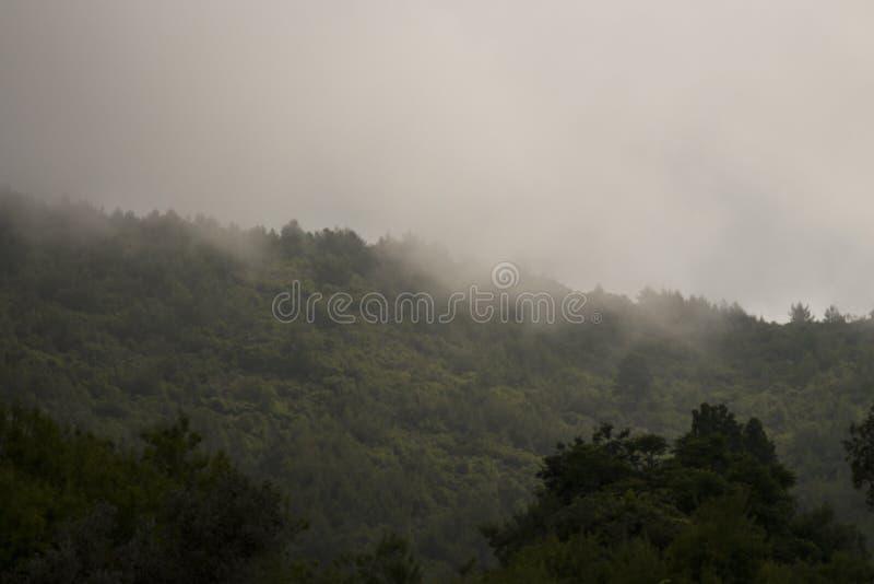 Dimma i bergen Berg som täckas med skogträd i dimma royaltyfri fotografi