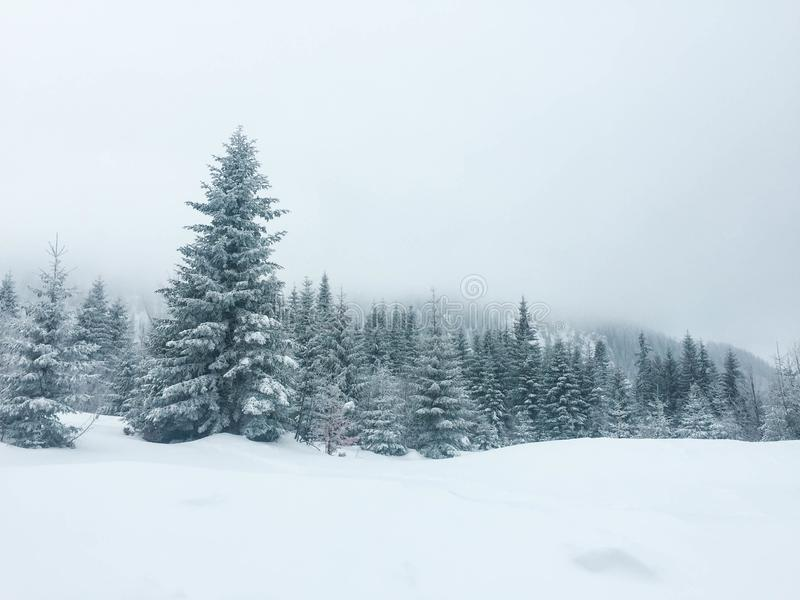 Dimma i bergskogen royaltyfria foton