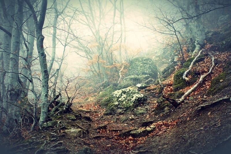Dimma i bokträdskog i berg royaltyfria foton