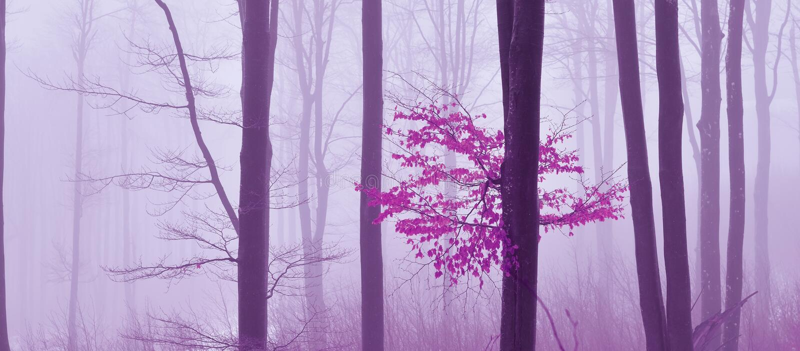 Dimma i den kulöra mystikerbakgrunden för skog Magisk forestMagic konstnärlig tapet saga Dröm linje Träd i ett dimmigt royaltyfria bilder