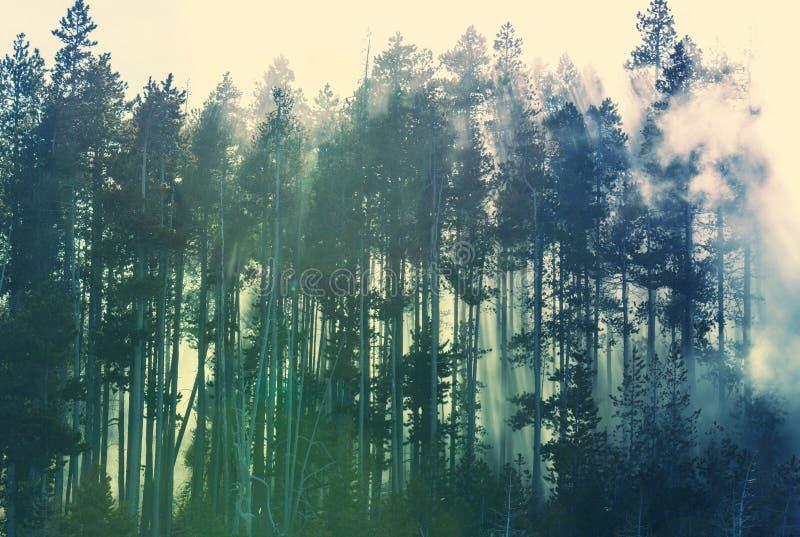Dimma i skog arkivfoton