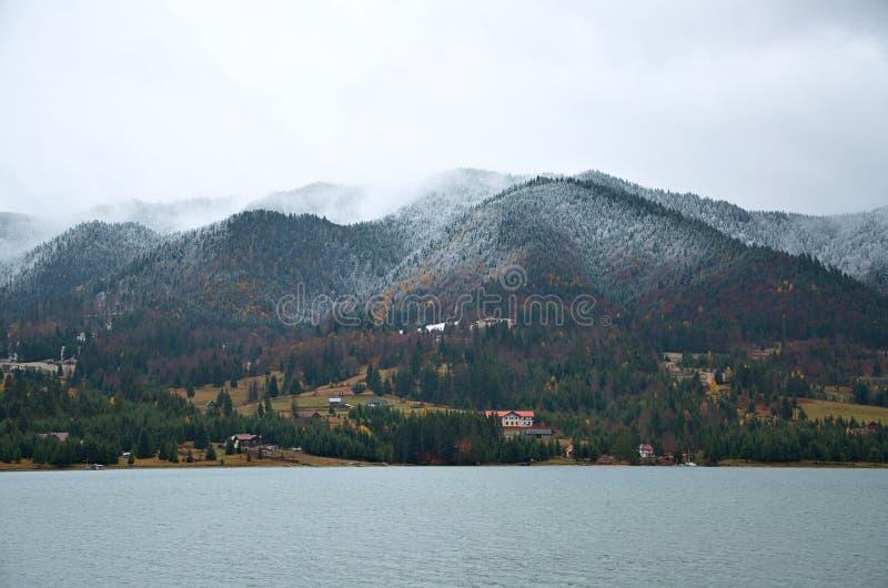 Dimma i skogen Bistrita Rumänien royaltyfri fotografi