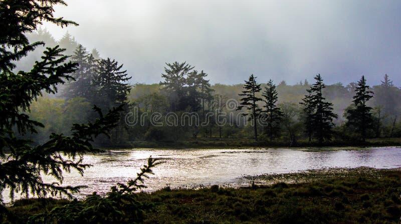 Dimma i träd på en kust- våtmark arkivbilder