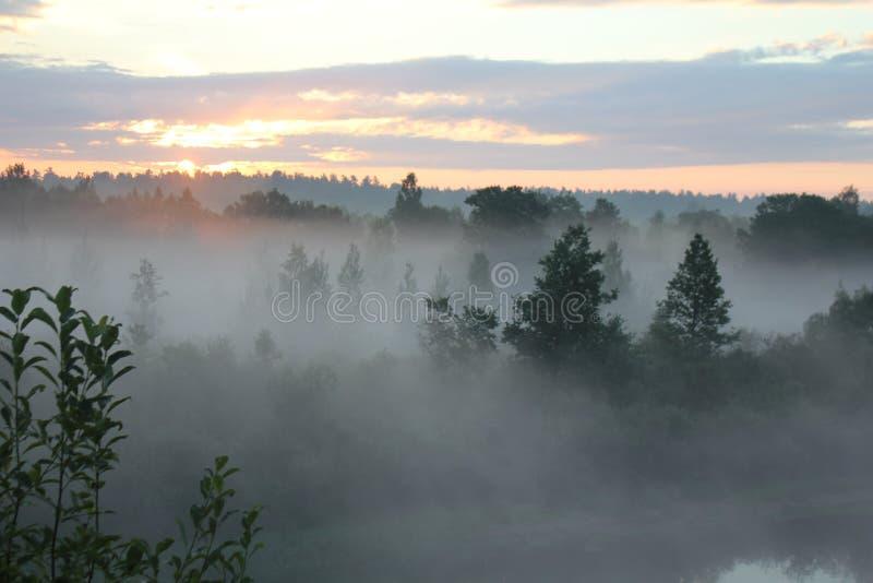 Dimma och härlig skog i solnedgången royaltyfri foto