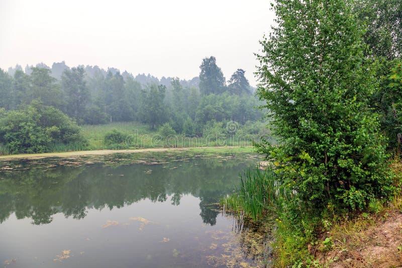 Dimma ovanför skogsjön royaltyfri fotografi