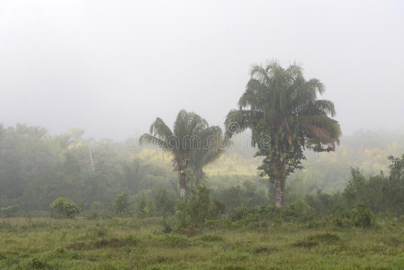 Dimma på djungler brukar i Sydamerika arkivbilder