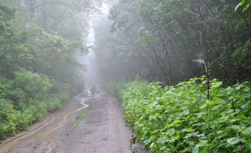 Dimma på vägen till bergen, arkivfoton