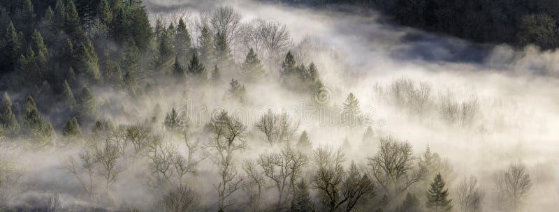 Dimma som rullar över skog i Oregon royaltyfria foton