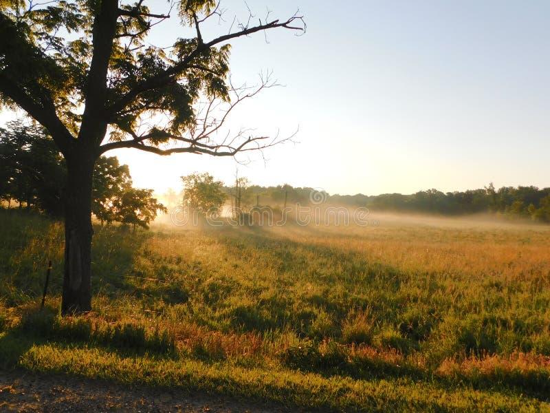 Dimma som varvas över fält royaltyfri foto