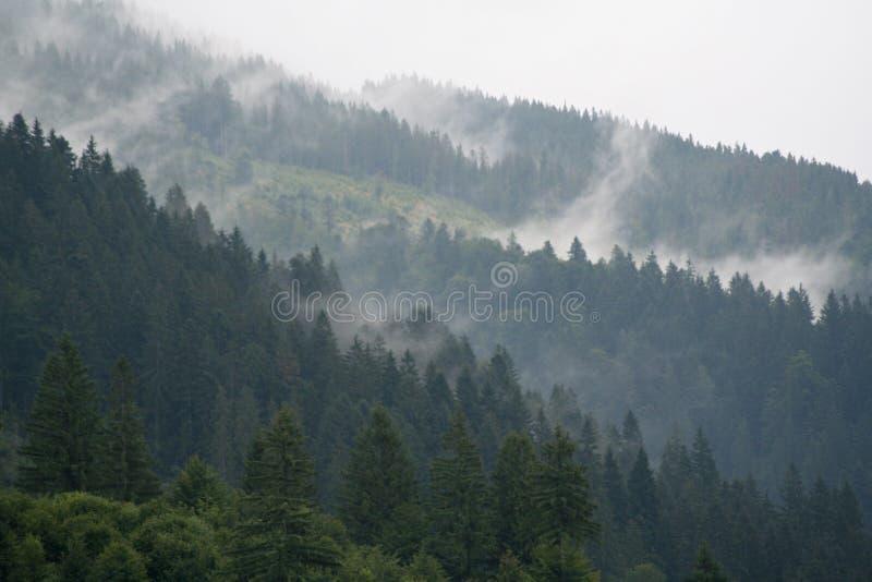 Dimma ?ver skogen i bergen royaltyfri foto