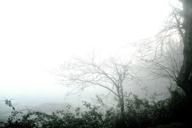 dimmaliggande arkivfoton