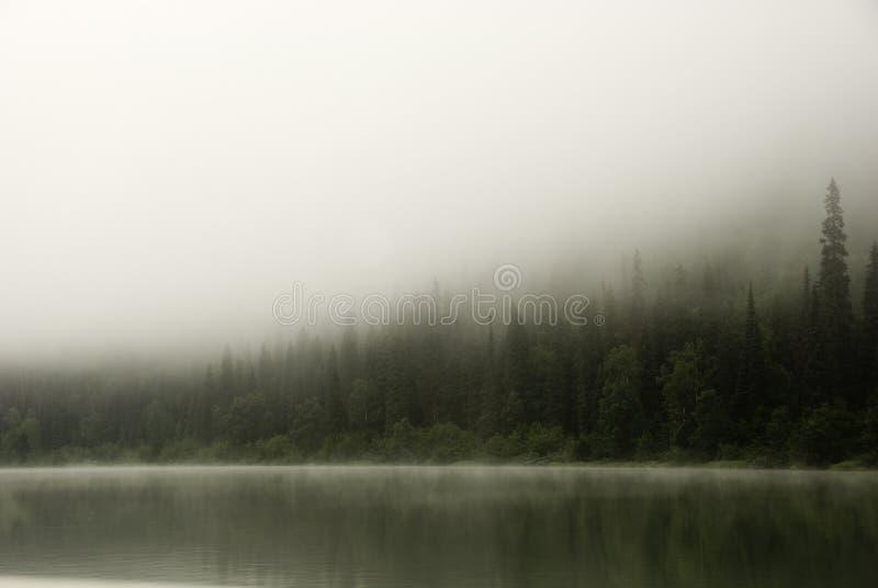 dimmamorgon över floden royaltyfri foto