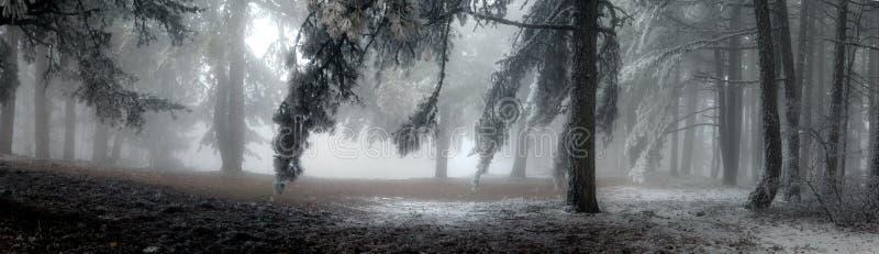 dimmaskog