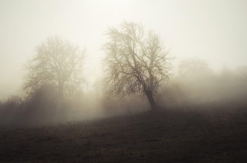 Dimmig äng med träd royaltyfria bilder