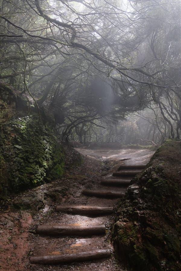 Dimmig bana i den våta skogen royaltyfria bilder