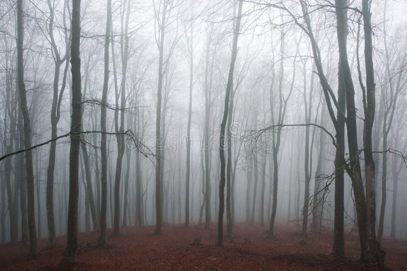 Dimmig bokträdskog arkivbilder
