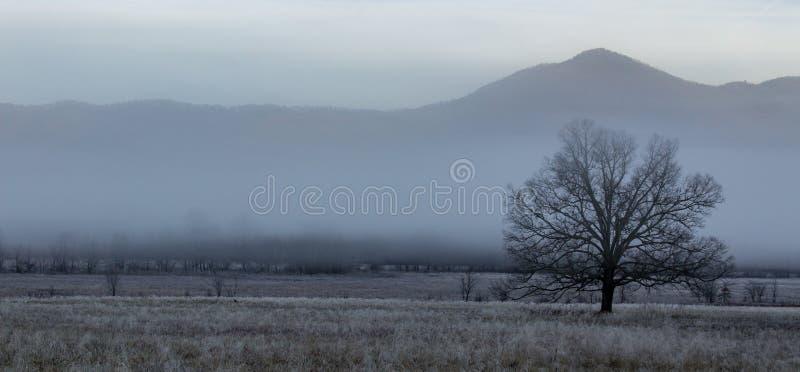 Dimmig cadesliten vikmorgon i stor nationalpark för rökiga berg arkivbilder