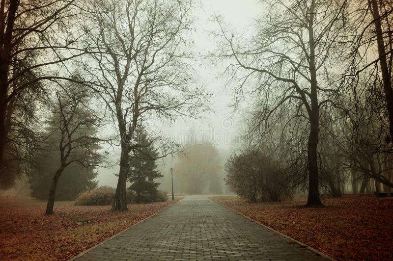 Dimmig gränd för höst - härligt höstlandskap royaltyfria foton