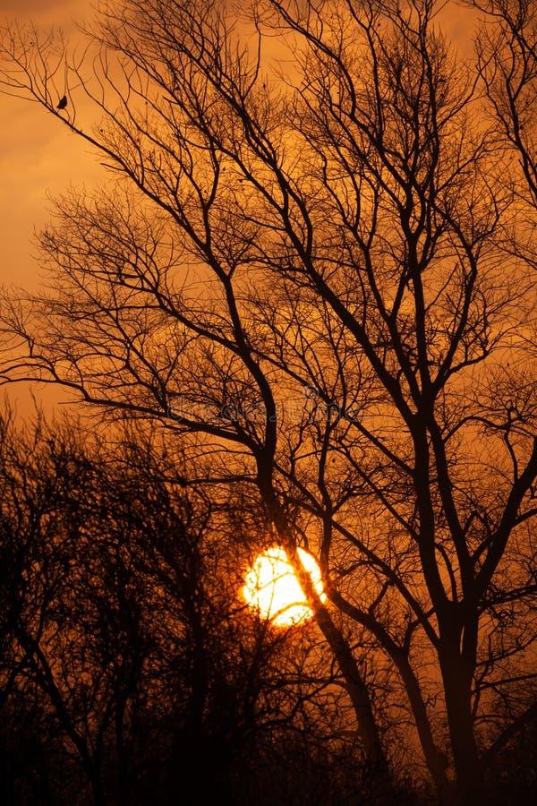 Dimmig höstsoluppgång till och med träd fotografering för bildbyråer