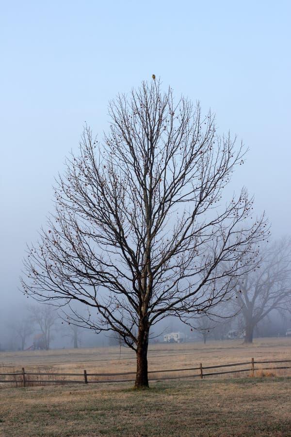 Dimmig landsmorgonsoluppgång avslöjer meadowlark uppe på ett träd royaltyfri bild