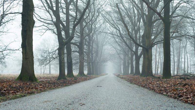 Dimmig landsväg i sikt för låg vinkel för vinterskog royaltyfria bilder