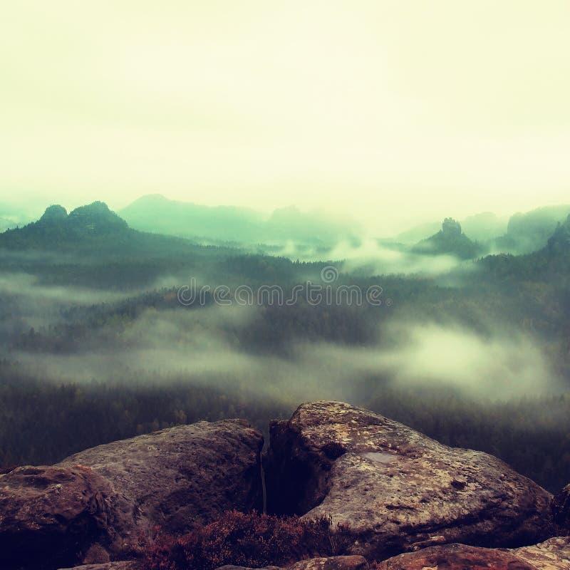 Dimmig melankolisk morgon Sikt över björkträd till den djupa dalen mycket av det tunga misthöstlandskapet inom gryning arkivfoto