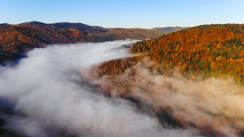 Dimmig morgon, berg och magisk och f?rgrik h?st f?r skog i Carpathians, Ukraina arkivbilder