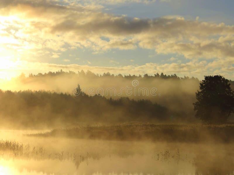 dimmig morgon för höst Litauen landskap royaltyfri foto