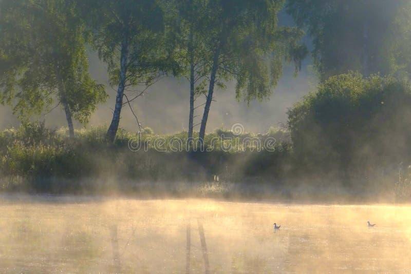 dimmig morgon för höst Litauen landskap royaltyfri fotografi