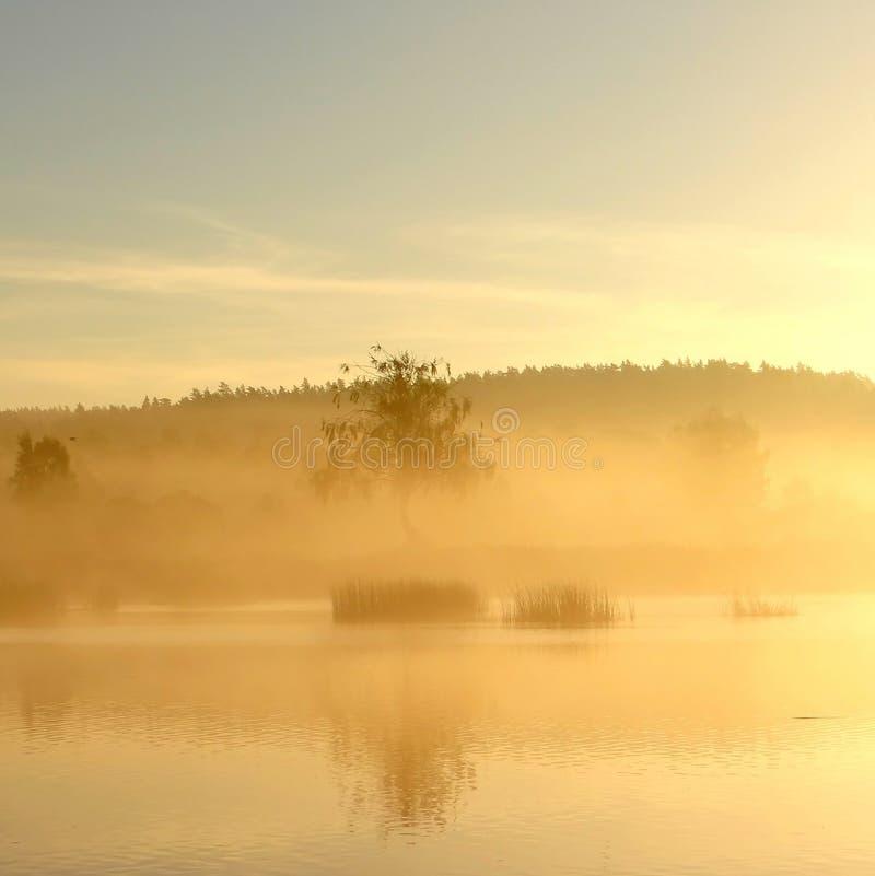dimmig morgon för höst Litauen landskap arkivfoton