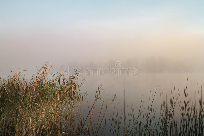 dimmig morgon för lake Gryning i dimman Vass och växter i förgrunden royaltyfria bilder