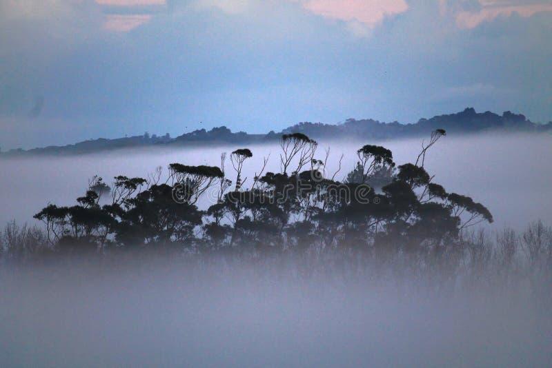 dimmig morgon för skog royaltyfria bilder