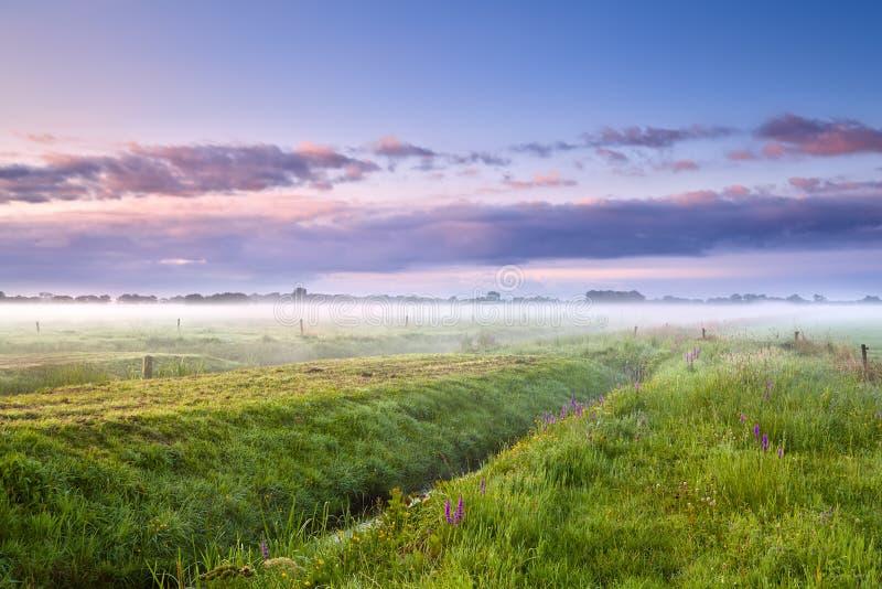 Dimmig morgon för sommar över ängar arkivbilder