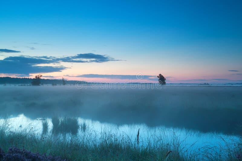 Dimmig morgon för sommar på myren royaltyfri fotografi