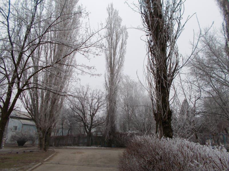 Dimmig morgon frost på träden, gator i Nikolaev arkivfoton