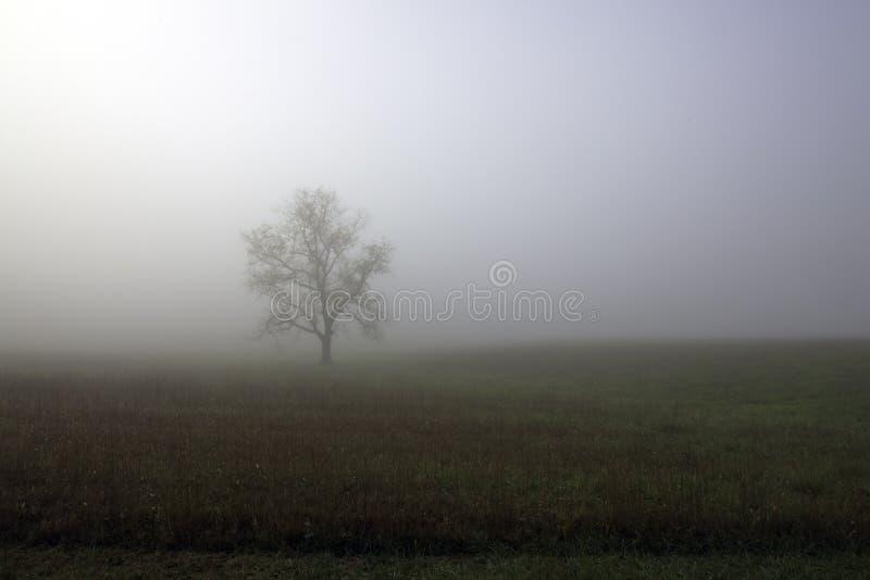 Dimmig morgon i den Cades lilla viken arkivfoto