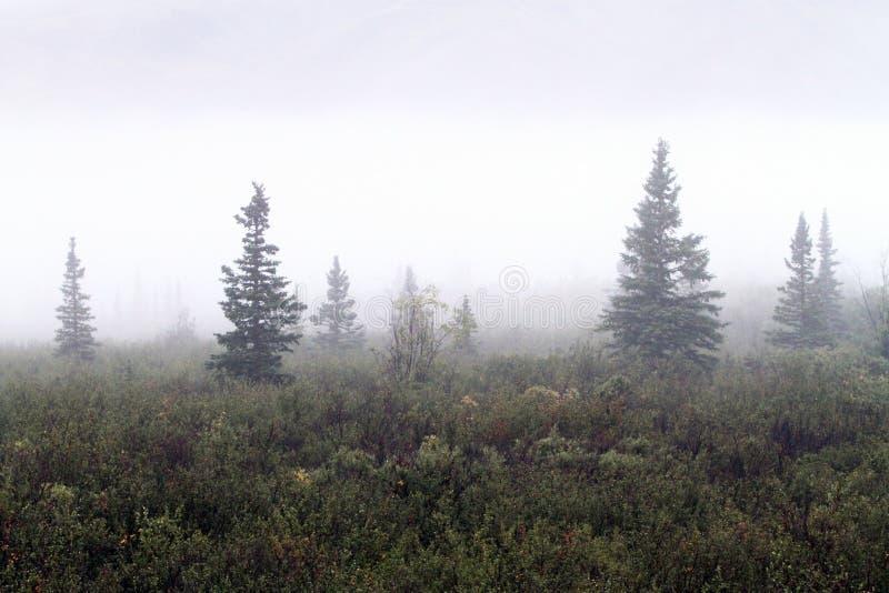 Dimmig morgon i Denali Alaska royaltyfri fotografi