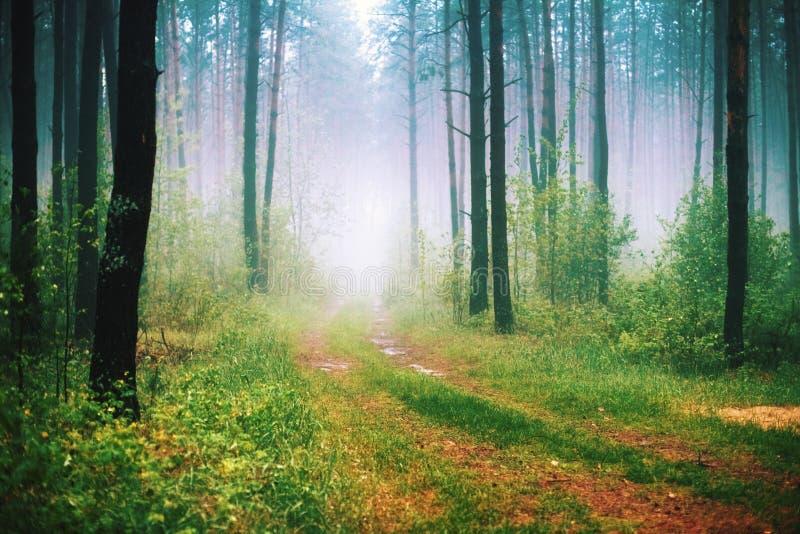 Dimmig morgon i skogen arkivbild